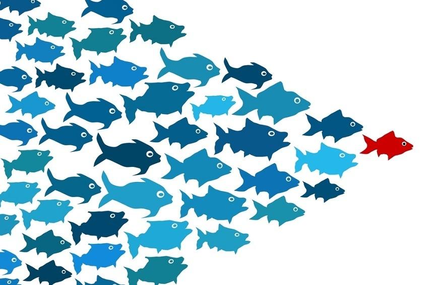 que-es-el-liderazgo-banco-de-peces