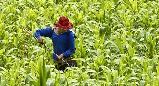 actividades-economicas-primarias-agricultura