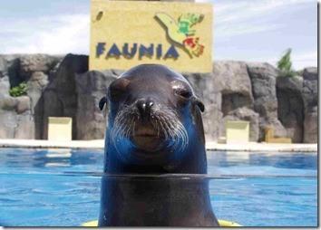 Faunia2