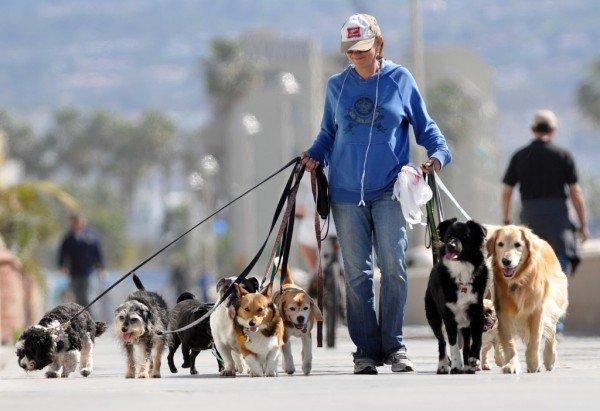 ideas-para-ganar-dinero-extra-pasear-perros