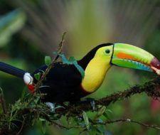 Trabajar y vivir en Costa Rica