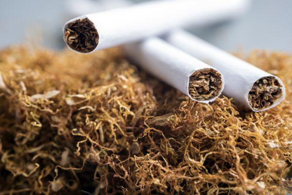 Planta de tabaco y cigarros